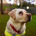 Un chien guide filme le quotidien d'une personne non-voyante