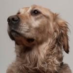 « Suis-je vraiment obligé d'accueillir les chiens guides ? »