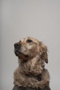 Chelta chien guide de yannick