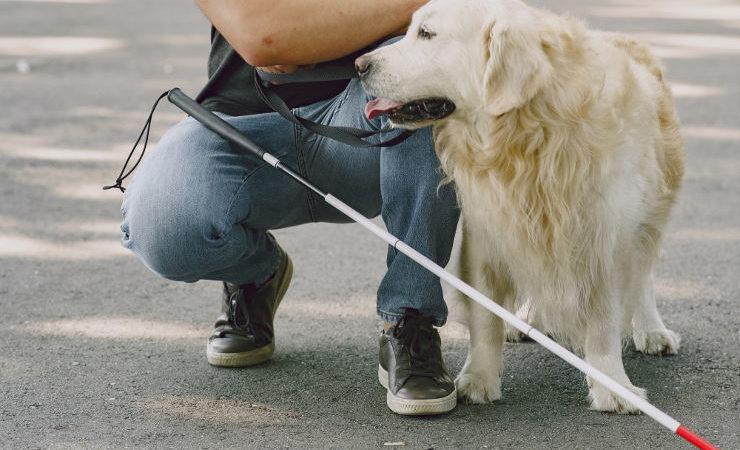 personne malvoyante et son chien guide