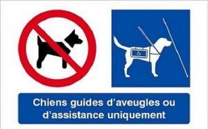"""Pictogrammes """"interdiction aux chiens"""" fusionné avec celui """"sauf chien d'assistance et chien guide"""""""