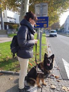 Personne déficiente visuelle devant un passage piéton avec son chien guide d'aveugles