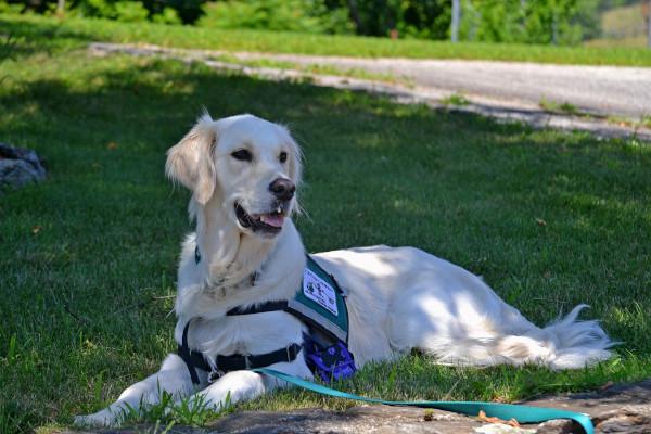 Un chien d'assistance dans un parc